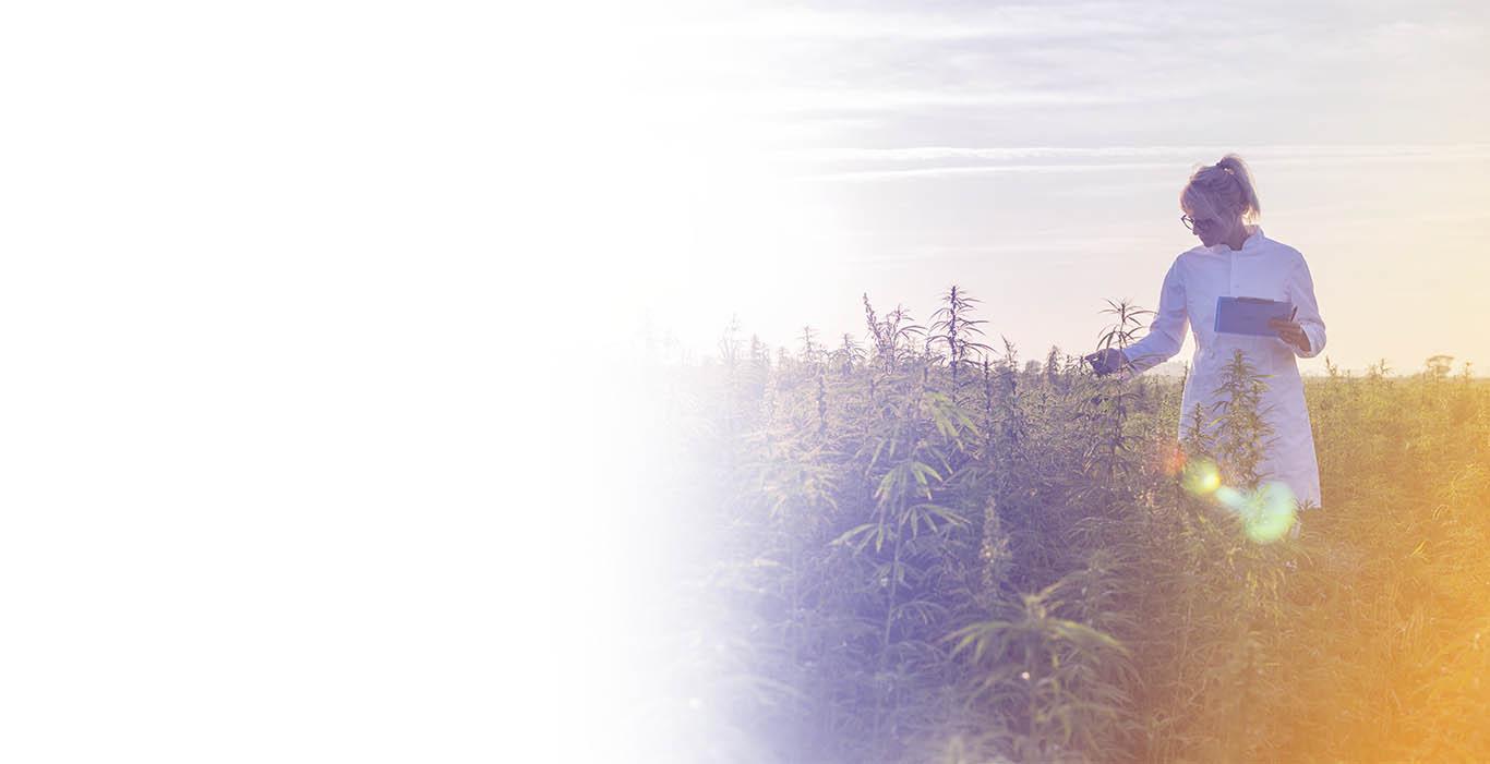 r&d tax credits for hemp